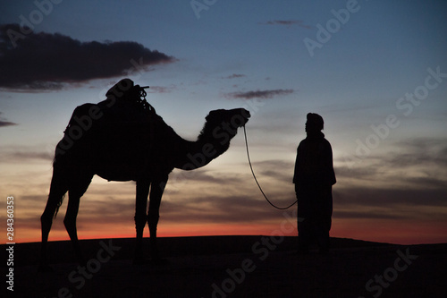Africa, Morocco, Tafilalet, Erfoud, Merzouga, Erg Chebbi, Dromedary (Camelus dromedarius) camel with Tuareg man, at sunset, on the Erg Chebbi Dunes (up to 400 feet in height) Billede på lærred