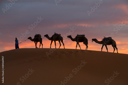 Vászonkép  Africa, Morocco, Tafilalet, Erfoud, Merzouga, Erg Chebbi, Dromedary (Camelus dromedarius) camels and caravan being led through desert by Tuareg man, on the Erg Chebbi Dunes (up to 400 feet in height)