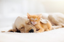 Cat And Dog Sleeping. Puppy An...