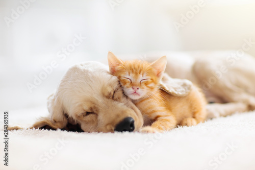 Photo Cat and dog sleeping. Puppy and kitten sleep.