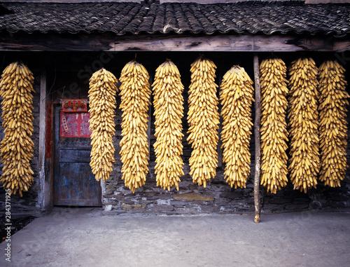 Valokuvatapetti Asia, China, Sichuan, Wolong Reserve
