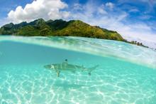 Split Shot Of Black Tip Reef S...