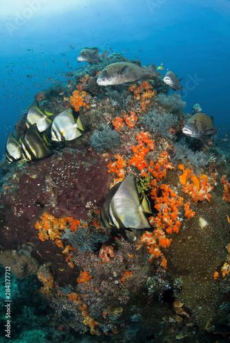 Indonesia, Komodo National Park, Tatawa Besar. Fish swim around coral. Credit as: Jones & Shimlock / Jaynes Gallery / DanitaDelimont.com