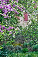 Fototapeta Uliczki France, Cordes-sur-Ciel. Historic wall with shuttered windows and garden