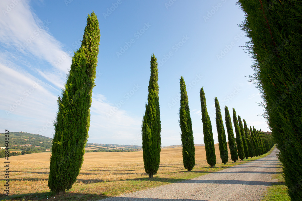 Italy, Tuscany. Road and cypress trees. Credit as: Gilles Delisle / Jaynes Gallery / DanitaDelimont.com
