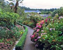 Scotland, Highland, Wester Ross, Inverewe Gardens. Over 2500 Species Of Plants Flourish At Inverewe Gardens, Highland, Scotland.