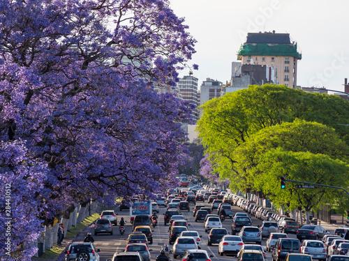 Poster Buenos Aires Jacaranda trees on Avenida Pres. Figueroa Alcorta in Recoleta. Buenos Aires, capital of Argentina.