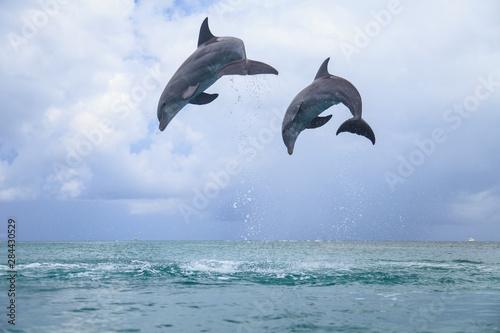 Foto op Plexiglas Dolfijnen Bottlenose Dolphins (Tursiops Truncatus), Caribbean Sea, Roatan, Bay Islands, Honduras