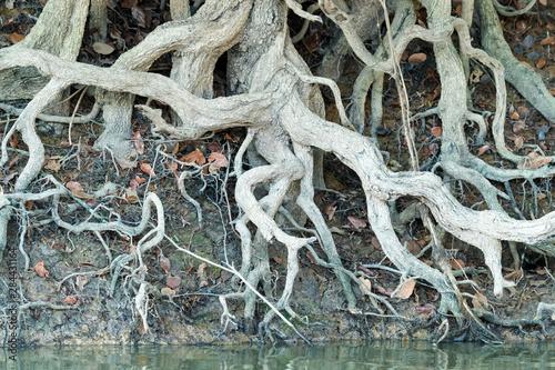 Fotografie, Tablou  Brazil, The Pantanal, Rio Negro