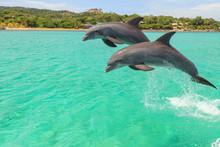 Bottlenose Dolphin (Tursiops Truncatus), Roatan, Bay Islands, Honduras