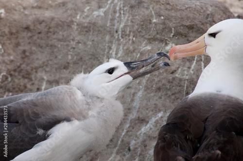 Falkland Islands, West Falkland, West Point Island aka Albatross Island Canvas-taulu