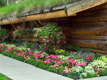 USA, Alaska, Anchorage. A Garden Of Colorful Flowers At The Log Cabin Tourist Center.