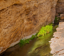 Arizona, Montezuma Well, Outlet Stream