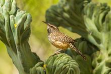 USA, Arizona, Desert Botanic G...