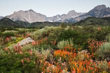 USA, California. Wildflowers B...