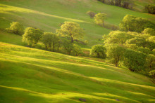 USA, California, Redwood National Park. Sunrise On Green Sloping Meadow.