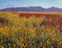 USA, California, Death Valley ...