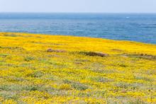USA, California, Coast Point B...