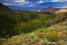 USA, California. Landscape With The Buttermilks.