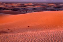 USA, California, North Algodones Dunes Wilderness, Vast Area Of Undulating Dunes At Sunrise.