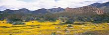 USA, California, Lancaster. Bright Yellow Blooms Fill The Desert Floor In The Lancaster Area, California.