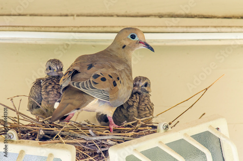 Sheltered Nesting Space and Mourning Dove Family atop a Security Light Canvas Print