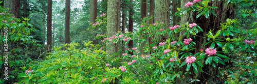 USA, California, Redwood NP Canvas Print
