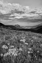 USA, Colorado, Crested Butte. ...
