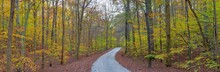 Road Through Trees In Fall At ...