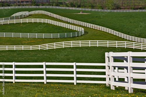 Fényképezés White fence winding across Calumet horse farm, Lexington, Kentucky