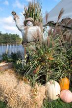 USA, Massachusetts, Wareham, Scarecrow And Fall Display