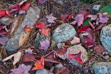 Autumn Leaves, Near Bubble Pon...