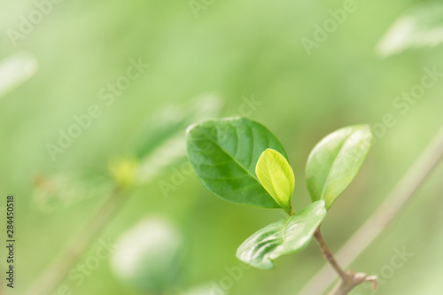 Pinturas sobre lienzo  Choose the focus point on the leaf,The leaves are fresh green with copy space
