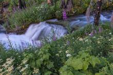 Wildflowers Along Baring Creek In Glacier National Park, Montana, USA