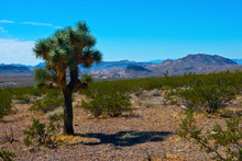 USA, Nevada, Mesquite. Gold Butte National Monument, Virgin Mountains