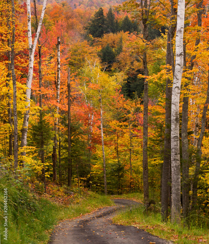 Photo USA, Maine, Bethel. Winding lane through autumn trees.