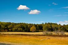 Early Autumn, Marsh Grass, Maq...