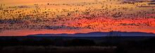USA, Bosque Del Apache, Birds ...