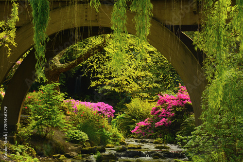 Fotobehang Azalea Spring color of azaleas and rhododendrons at Crystal Springs Rhododendron Garden, Portland, Oregon, USA.