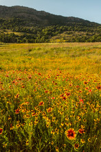 USA, Oklahoma, Wichita Mountains National Wildlife Refuge. Field Of Indian Blanket Flowers. Credit As: Cathy And Gordon Illg / Jaynes Gallery / DanitaDelimont. Com