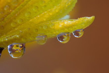 Dew Drops Reflecting Flowers M...