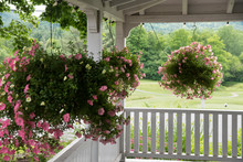 Hanging Flowers On Porch In Ra...