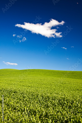 Photo Rolling Hills of Wheat