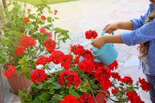 Little Girl Watering Red Flowers On Backyard, Closeup. Home Gardening