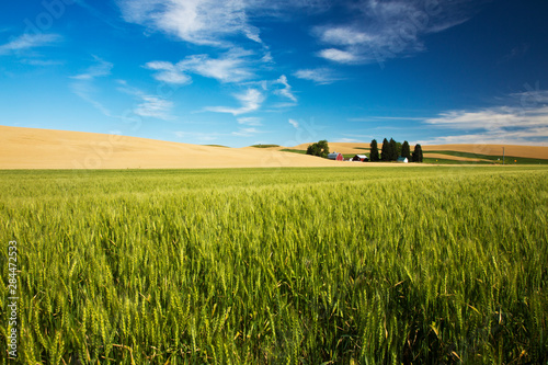 USA, Washington State, Red Barn in Fields of Spring and Winter Wheat Canvas Print