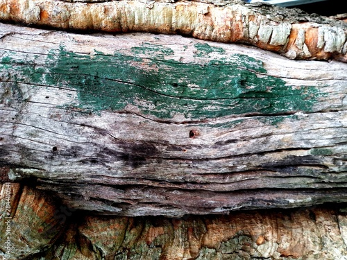 old bark tree wood backgrounds #284480541