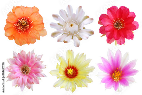 Keuken foto achterwand Cactus Set of bloom colorful flowers cactus with isolated on white background