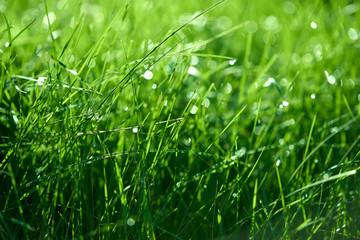 GrassDew16
