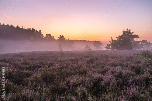 Deurstickers Lichtroze Landscape photo from the heather, here is an atmospheric Sunrise on the Teut in Limburg, Belgium
