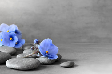 Zen stones and violet flowers on grey background.